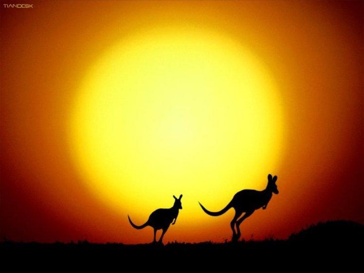 kangourou02